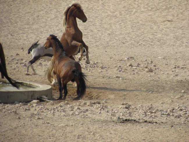 Wild horses…